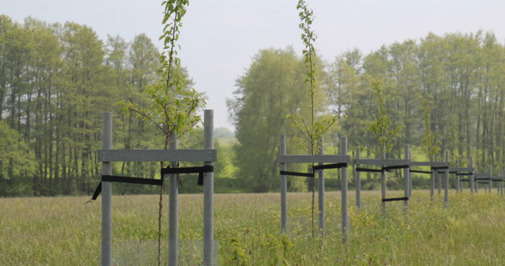 Wertholzstreifen - Biohof Garvsmühlen
