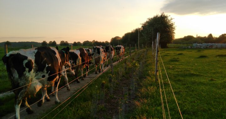 Futterlaubhecke - Rieckens Landmilch